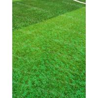 Cheap Soccer Synthetic Grass Infill TPV Eco Rubber Granulate Heat Resistance for sale