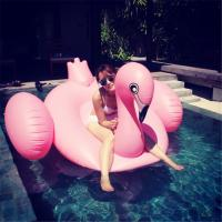 The Flamingo inflatable Quality PVC float pool float Brand New