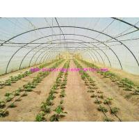 1.67g/m Industrial Split Film Poly Baler Twine Raw White Color For Tomato Tree