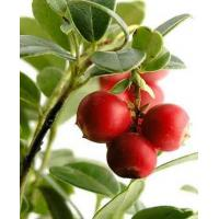 Cheap CAMU CAMU for sale