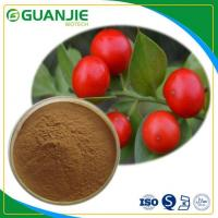 Cheap Butcher's Broom P.E Ruscus Aculeatus Extract Hot Sale Ruscogenin Powder L Hot Sale And Sample Free for sale