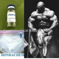 Cheap White Powder Testosterone Raw Steroid 250mg/ML Testosterone Enanthate for bodybuilding for sale